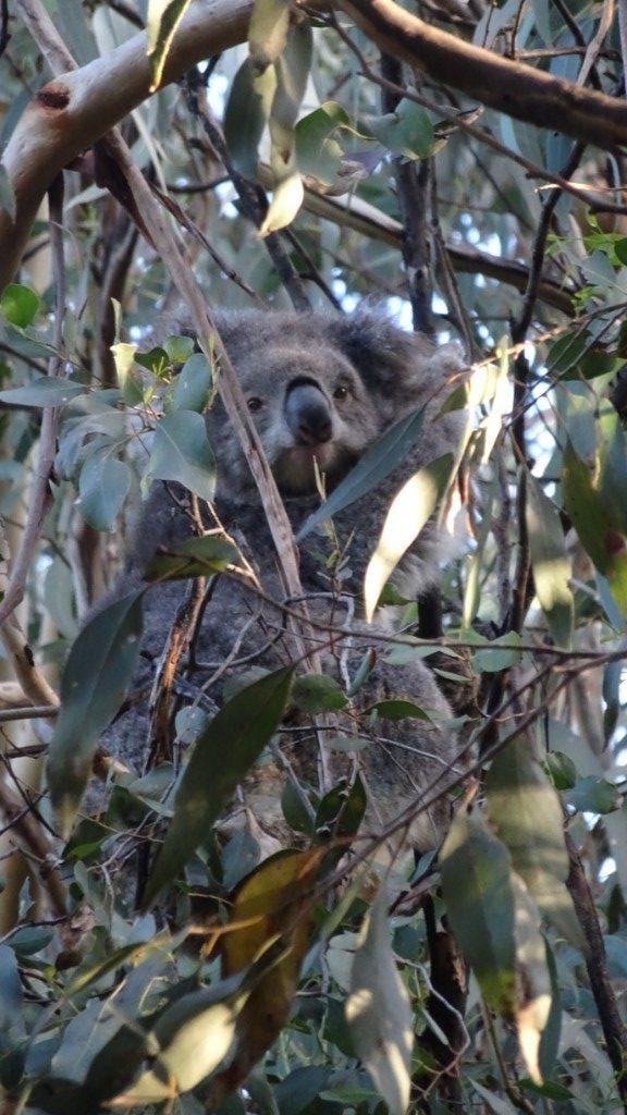 wildlife spotting in australia