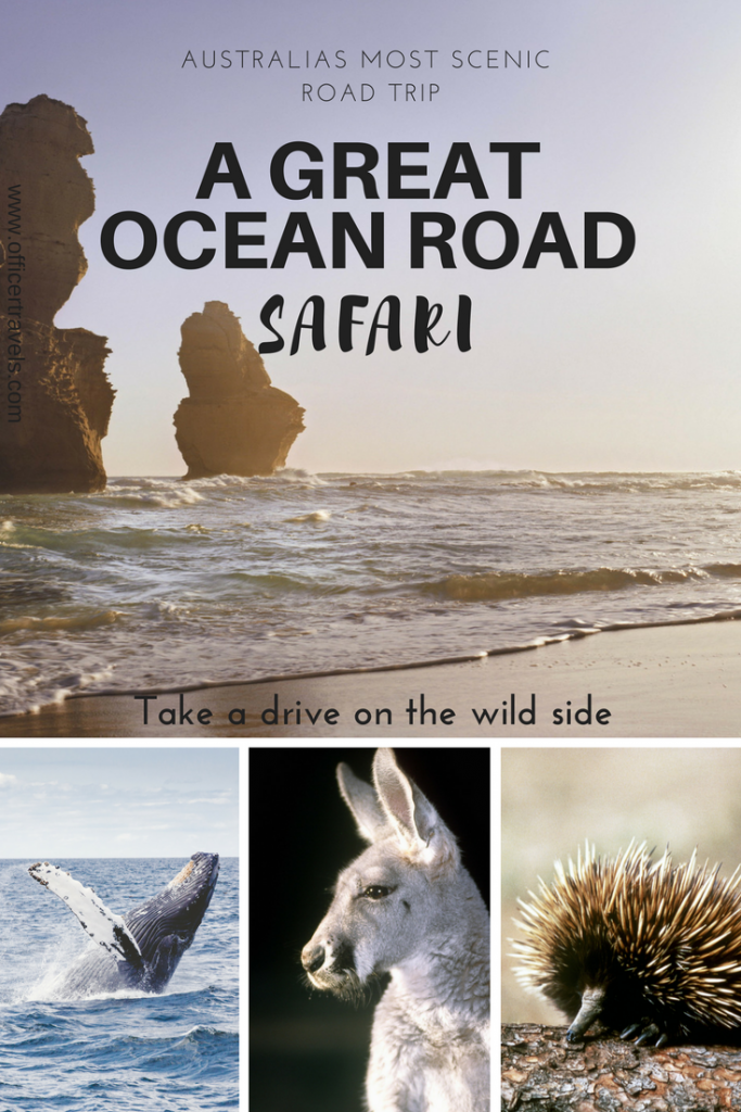A guide to making the most of your Great Ocean Road tour