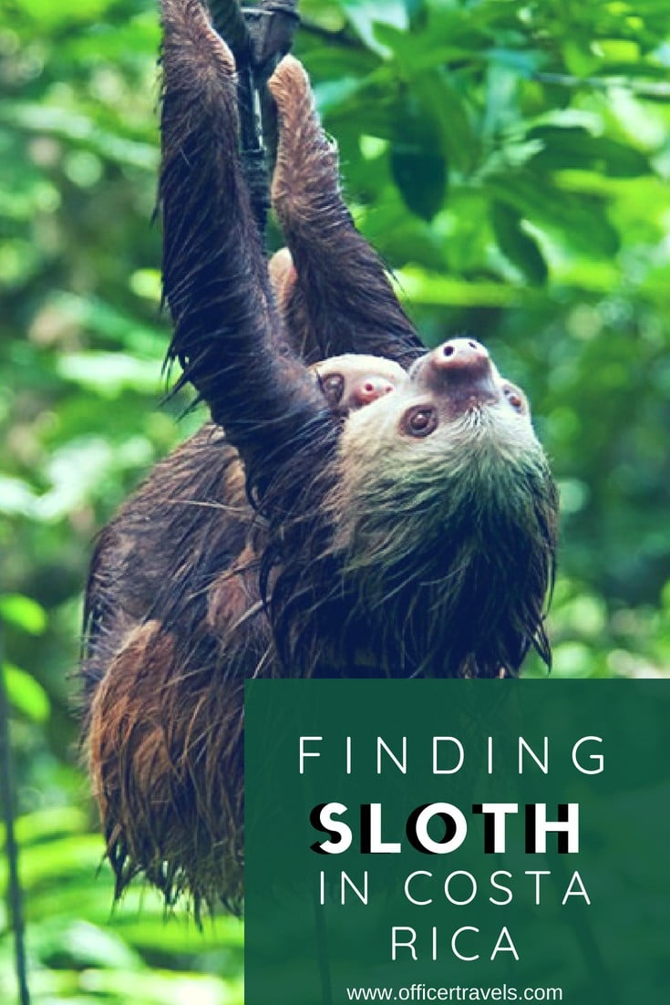 How to ethically find Sloth in Tirimbina Reserve | we spoke to a wildlife expert about her experiences in Costa Rica searching for wildlife. Find out how you can ethically see these animals in the wild and some more ethical travel advice! | #ethicaltravel #echofriendlytravel #sloth #costarica #wildlifeseries