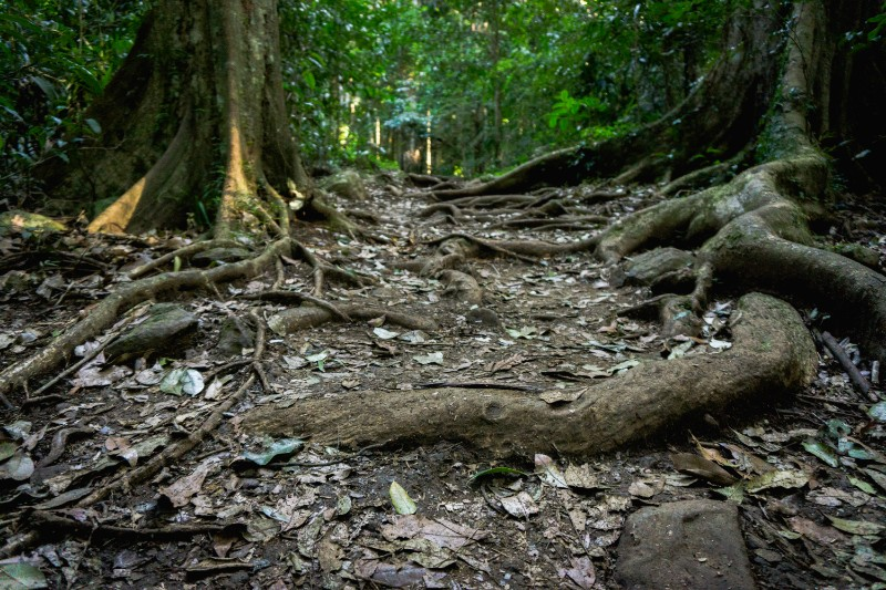 mount tamborine national park has so many walking tracks is hard to know which to do first