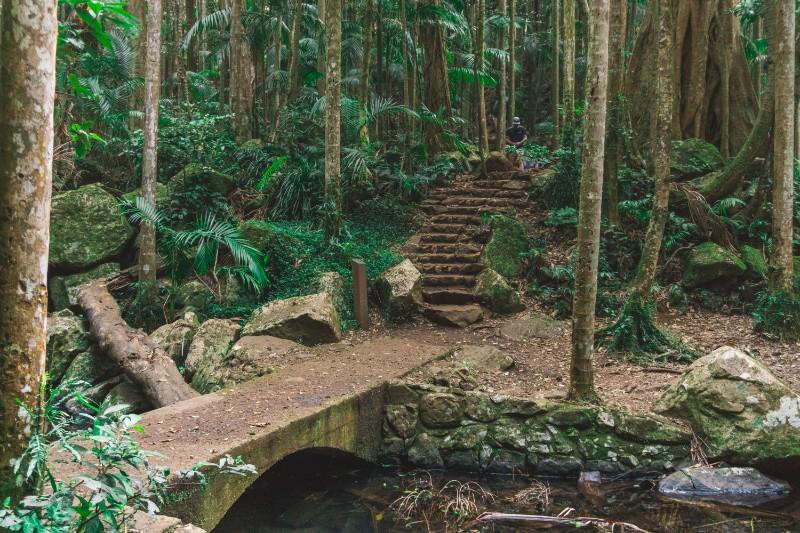 walking tracks in Mount Tamborine lead to amazing adventures in nature