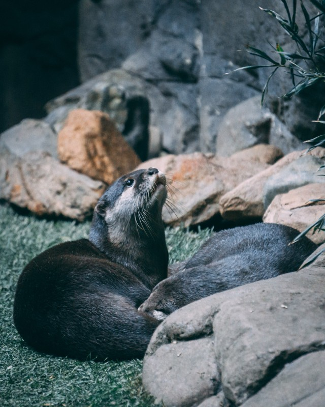 Discover why you should visit Australia Zoo on a two day pass with our latest Photo Diary| #Australia #Zoo #wildlife #ethicaltourism #conservation #australianwildlife #thingstodoinAustralia