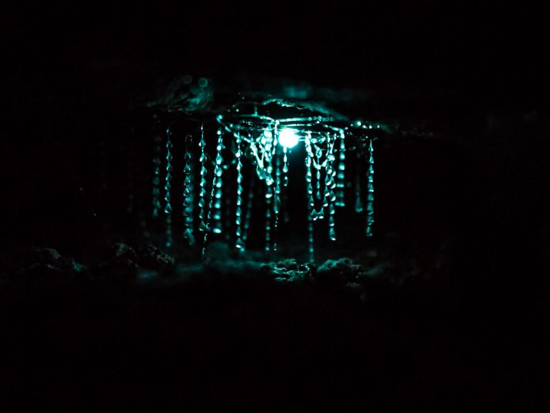 Things to do in Hokitika include seeing the glow worms
