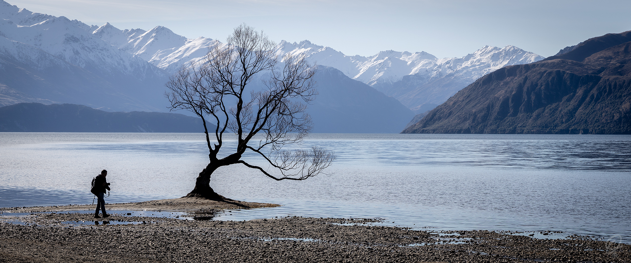 That Wanaka Tree - for most people, this is the only reason to come to Wanaka