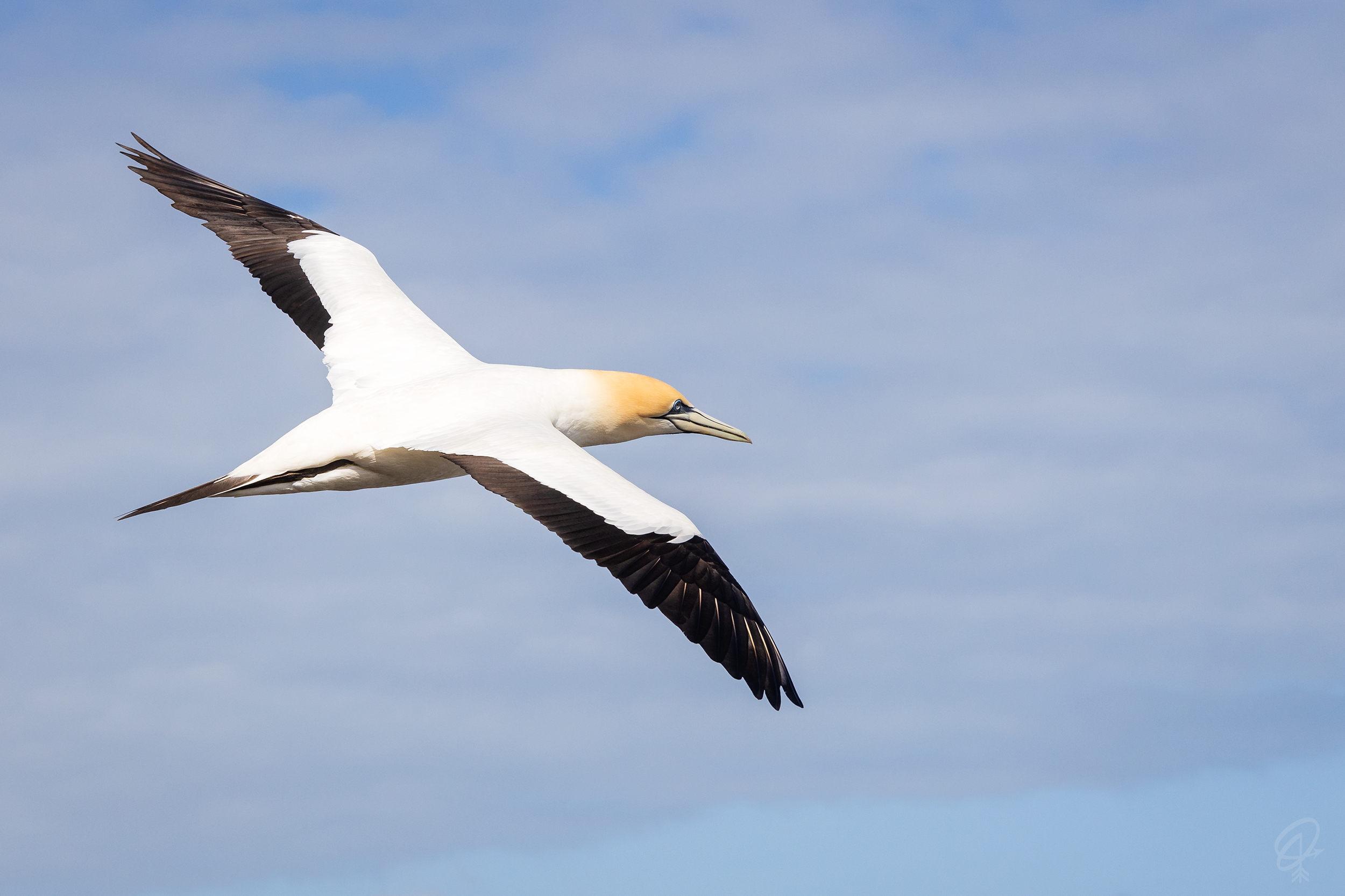 Unique places to visit on New Zealand's North Island include the gannet colony near Auckland