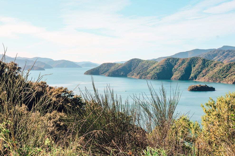 You can see glow worms for free on the Queen Charlotte Track