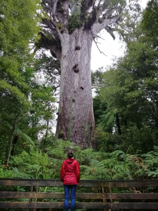 Leah standing in front of The Giant Kauri Tree on New Zealand North Island which is truly unique.