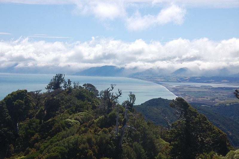 Aorangi Forest at Cape Palliser