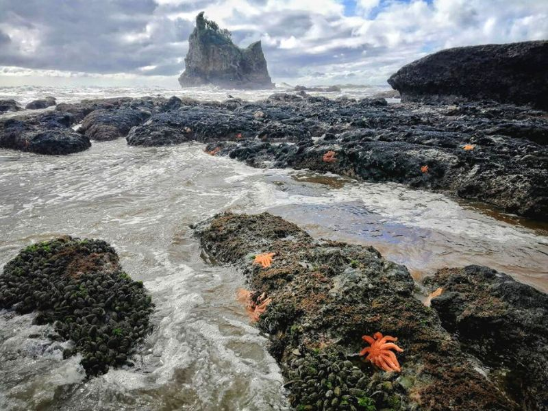 Rugged coastal landscape with sea stars and stormy clouds our favourite secret west coast locations