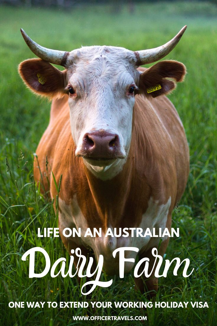 Life on a dairy farm pinterest image with text overlay