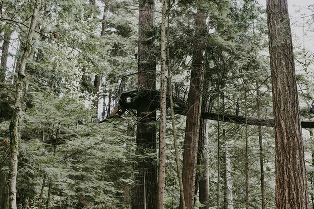 unique things to do in hokitika include this tall tree top walkway
