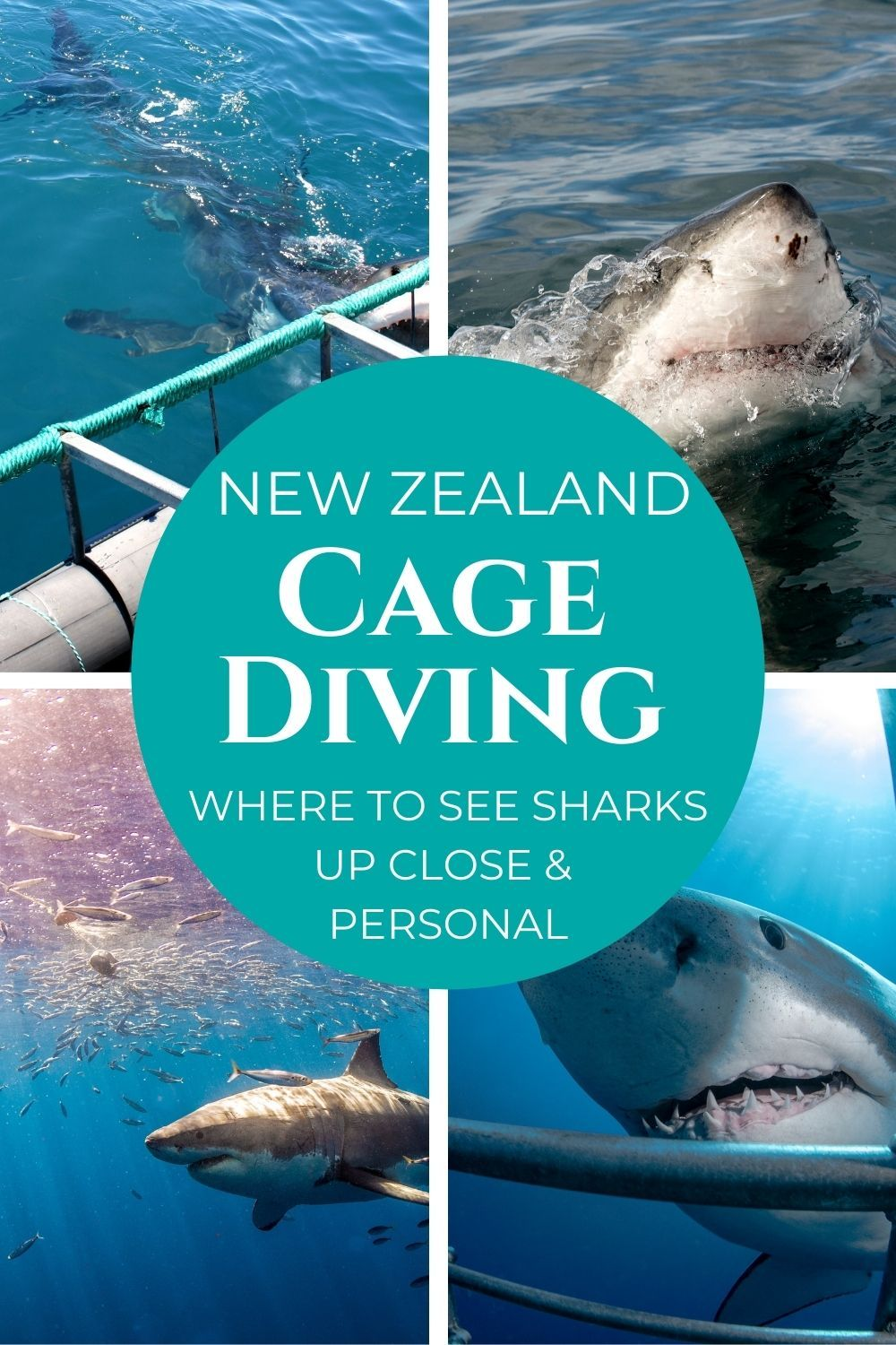 cage diving with great white sharks in New Zealand